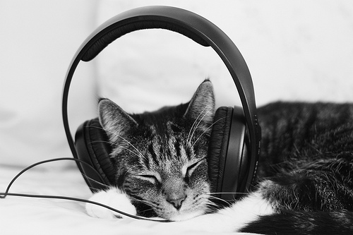 HEADPHONECAT2
