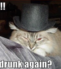 gwendalperrin.net wtf cat drunk