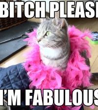 gwendalperrin.net cat lolcat lobby félin bitch i'm fabulous
