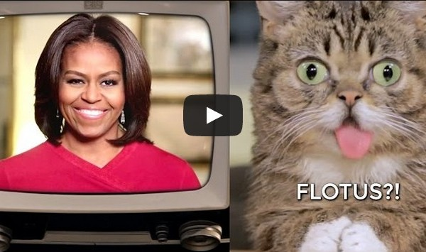 VIDEO. Lil Bub a une nouvelle esclave dans son escarcelle : Michelle Obama.