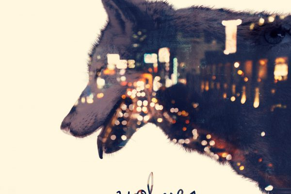 gwendalperrin-net-eco-wolves